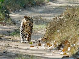 Kumbhalgarh Wildlife Sanctuary 2