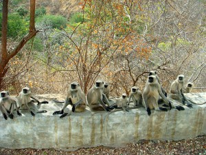 Kumbhalgarh Wildlife Sanctuary 4